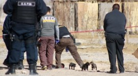 Narcoviolencia en la Tarahumara: matan a cuatro hombres