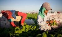 Que los niños trabajen en el campo dignifica: titular de Saparpa