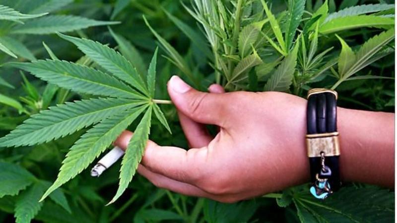 Los cambios a Ley de Cannabis castigarían aún más el consumo