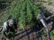 Vivir de la mariguana | Crónica de su siembra en la sierra de Sinaloa