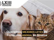 'Queremos mejores leyes para la protección animal en Sinaloa', se manifiestan en redes