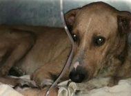 Integra Fiscalía datos de prueba en investigación por agresión contra canino
