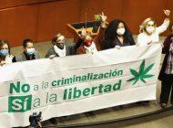 ¡Marihuanizaron la legaliguana! Senado aprueba despenalización del uso lúdico de cannabis