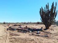 SEDATU otorga terrenos a Ejido Emiliano Zapata; campamento sufre atentado